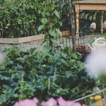 How Does Your Garden Grow: Eco-Friendly Summertime Gardening