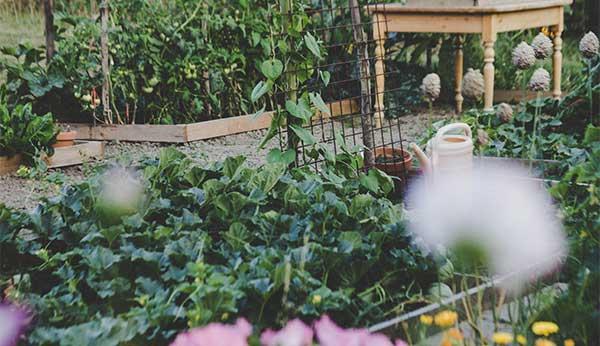 Summertime Gardening Eco-Friendly