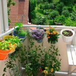 Living Green - Your Eco-Friendly Apartment, Part II
