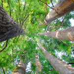 Arbor Day and Climate Change: Why It Matters