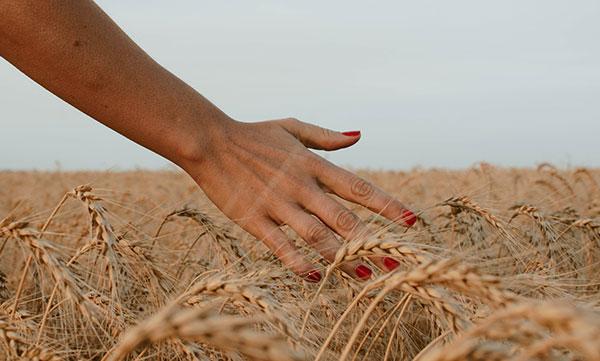 Harvest   Going Green Ideas Fall Gardening - field image