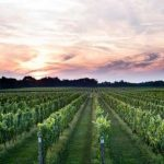 Sip Sustainable Wine: New York Eco-Friendly Wineries and Vineyards