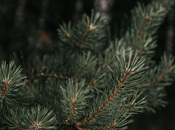 DIY The Holidays: Eco-Friendly Decor Ideas for Christmas and Hanukkah