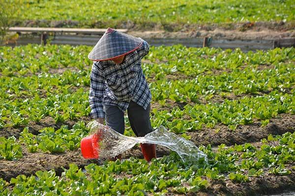 Eco-Friendly Garden Pest Control