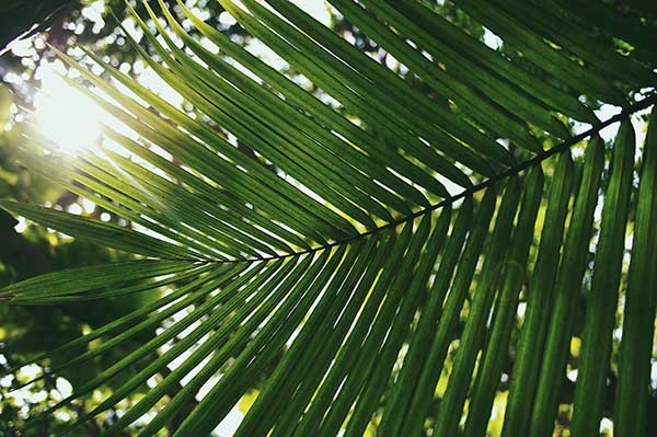 Lady Palm | Help Air Quality