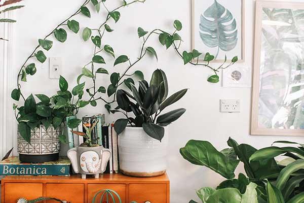 Plants Help Air Quality Ivy Healthier