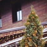 The Greening of Christmas: Why and How To Recycle Your Christmas Tree