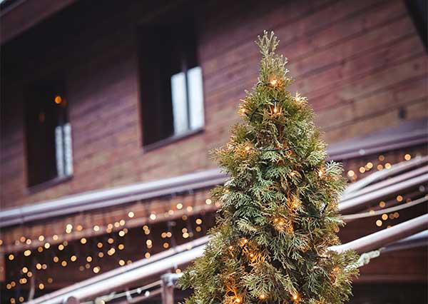 Christmas Tree Recycling Green Energy