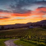 Discover Ontario's Green Wineries