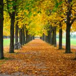 Tips for Enjoying Fall Foliage