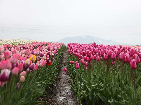 Spring Planting What to plant | Image of flowers