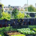 50 Photos of Urban Farming That Will Make You Want to Get Back to Nature