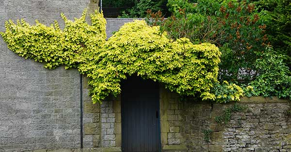 Shrubbery | Energy Efficient Fixes for Home Energy Savings
